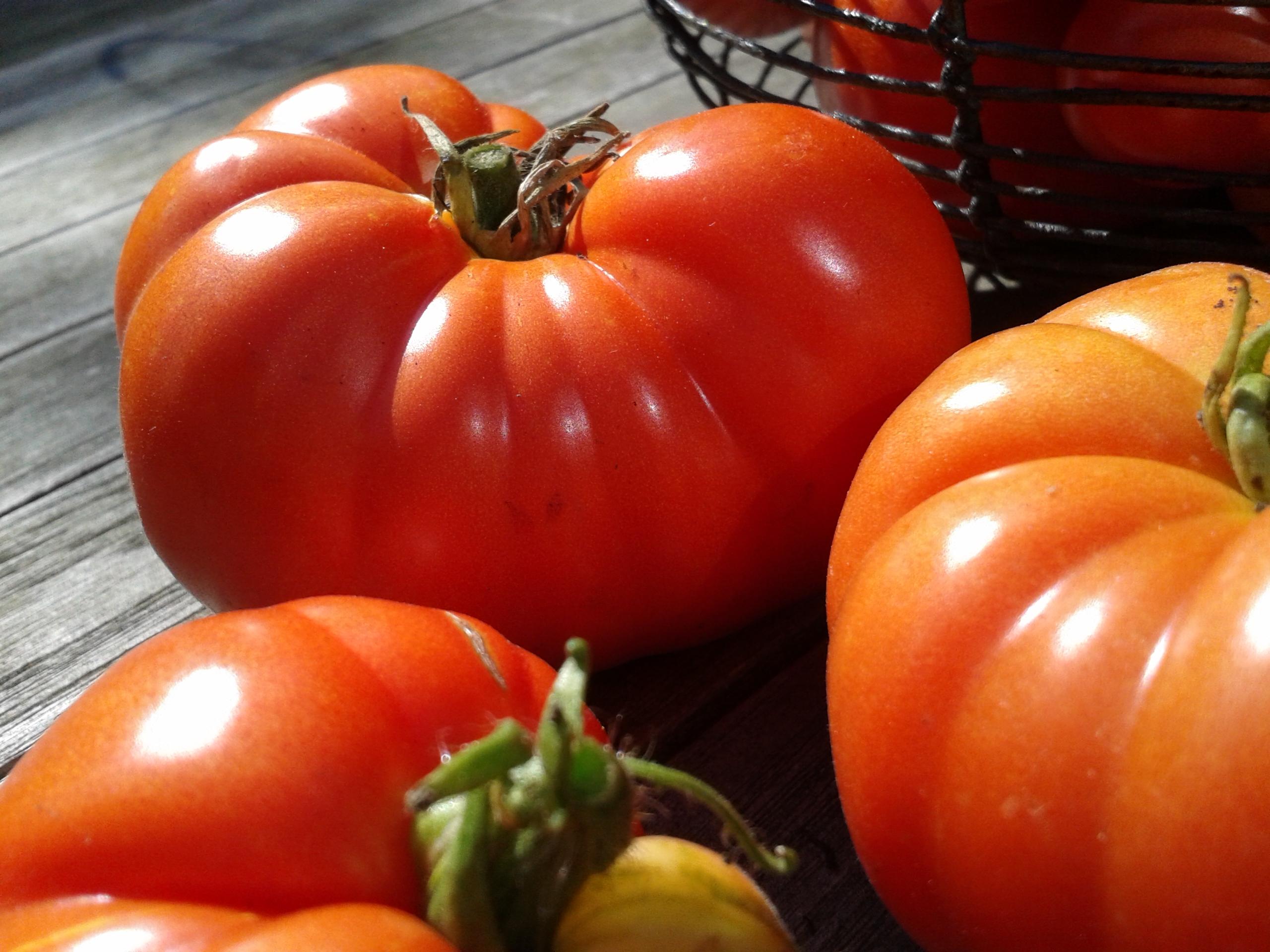 tomates le jardin d 39 emilie. Black Bedroom Furniture Sets. Home Design Ideas