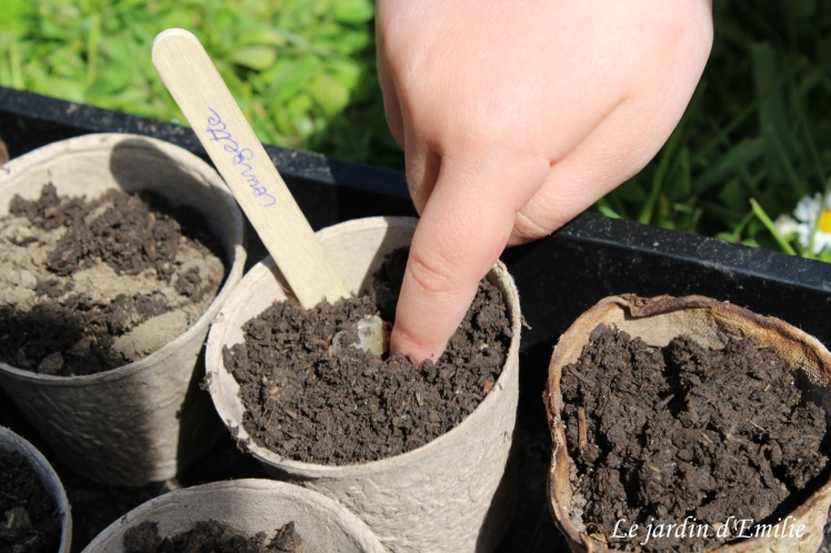 semis graines bio